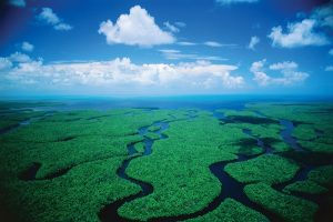 Visit Everglades National Park by Boat