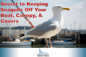 Secret to Keeping Seagulls Off Your Boat, Canopy, & Covers